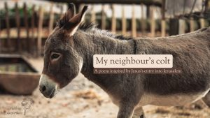 Profile picture of a young donkey with the text over the top: My neighbour's colt, a poem inspired by Jesus's entry into Jerusalem. Faith in Grey Places