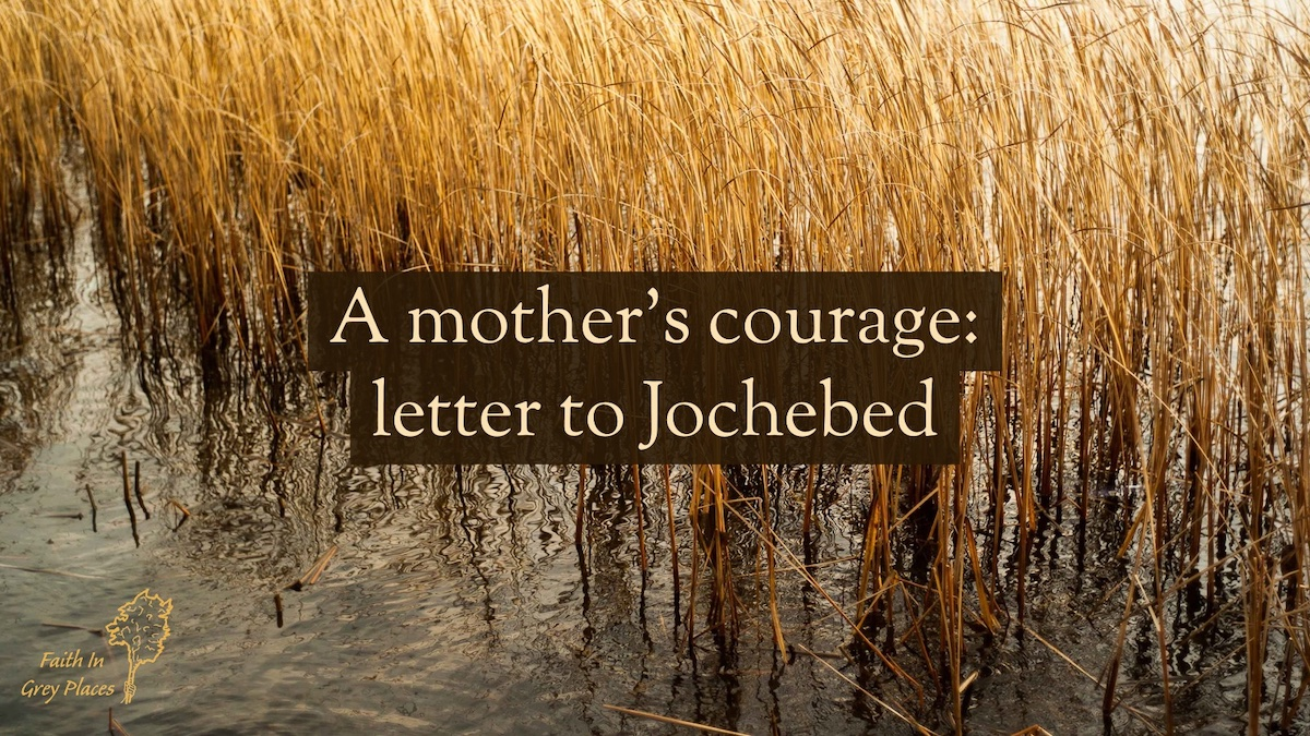 Yellow reeds in a river. Text over the top: A mother's courage: letter to Jochebed. Faith in Grey Places